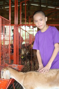 Graco Farm 136
