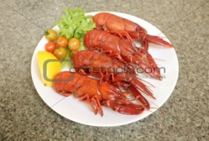Marron Crayfish
