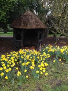 Daffodils.3
